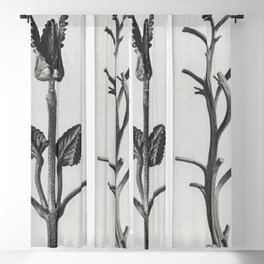 Stachis Grandiflora (Big Betony) enlarged 3 times andNicotiana Rustica (Aztec Tobacco) from Urformen Blackout Curtain