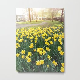 yellow daffodil flowers Metal Print