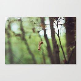 Dead leaf Canvas Print