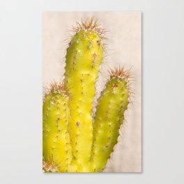 lemon cactusI Canvas Print