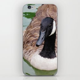 Beauty Shot of a Canada Goose--Animal Photography Prints iPhone Skin
