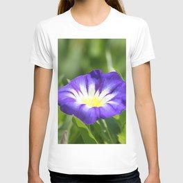 Dwarf Morning Glory Convolvolus tricolor T-shirt