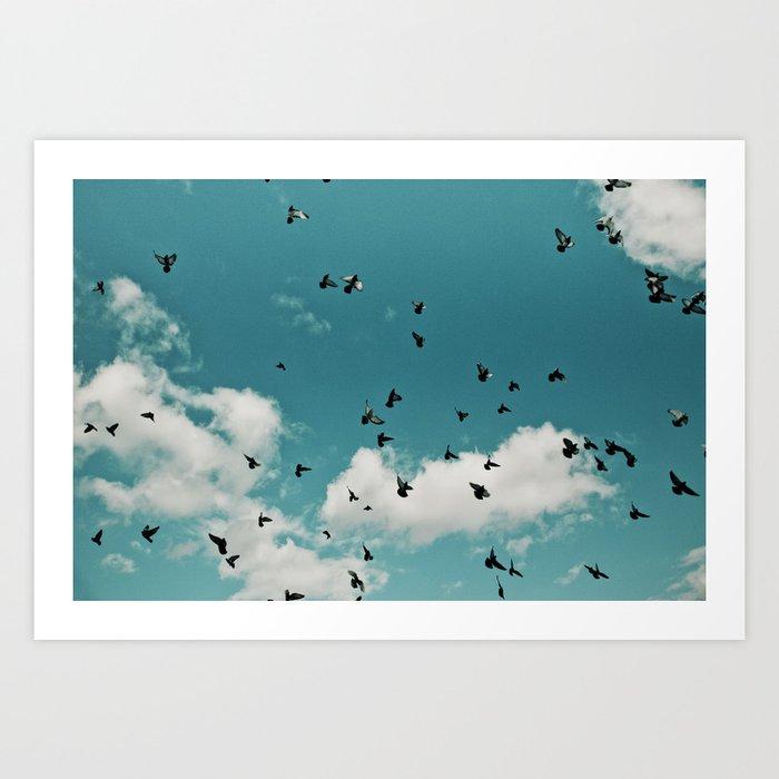 Birds 003 Art Print