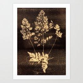 Botanicus (41) Art Print