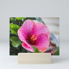 Large Pink Hibiscus Mini Art Print