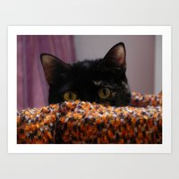 Curious tortoishell cat Art Print