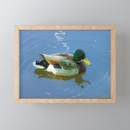 Ducks swimming Framed Mini Art Print