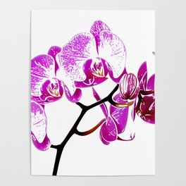 Orchidea, flower Poster