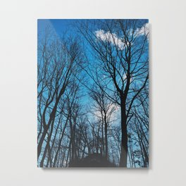The blue sky and the tall trees Metal Print