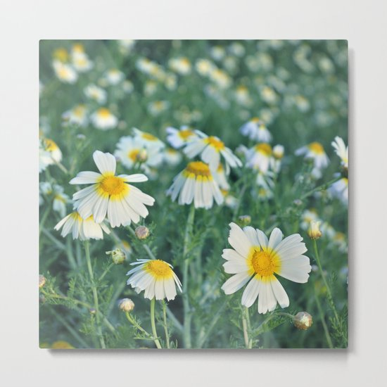 Spring daisies Metal Print