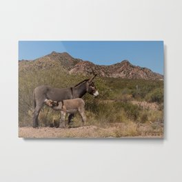 A little donkey drinking milk from his mom on a mountain road Metal Print