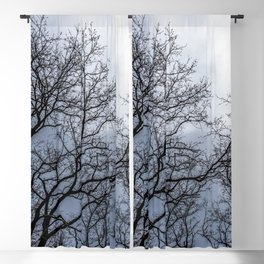 Haunting trees during a cloudy day Blackout Curtain
