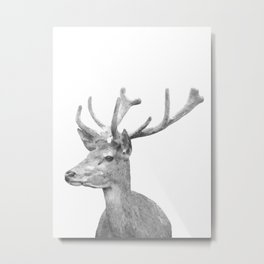 Black and white deer animal portrait Metal Print