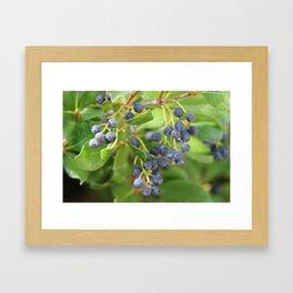 Huckleberry Bush Framed Art Print