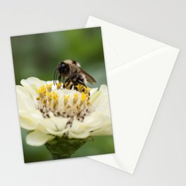 Sitting Pretty Stationery Cards