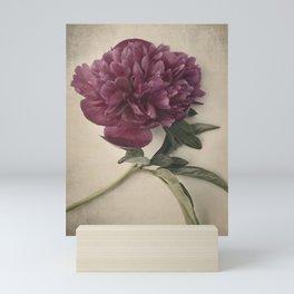 Scents of Spring - Burgundy Peony ii Mini Art Print