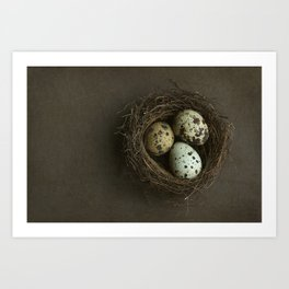Quails Eggs and Nest Art Print