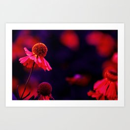 last Summerflowers in the dark Art Print