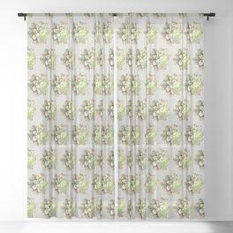 Echeveria Sheer Curtain