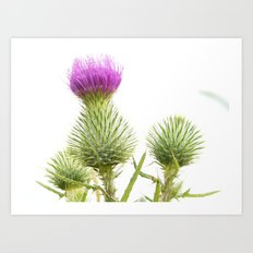 Nature Photography Art Print