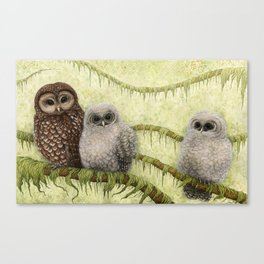 Northern Spotted Owls Canvas Print