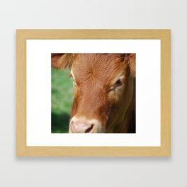 Crying Cow Framed Art Print