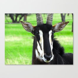 Zoomed-in Canvas Print