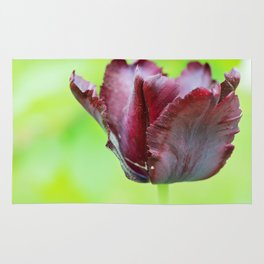 Gorgeous dark macro tulip over green background Rug