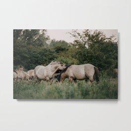 Wild Konik horses standing in the green field | Wildlife photo art print Metal Print