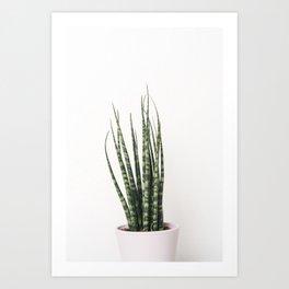 Trendy Cactus plant Art Print