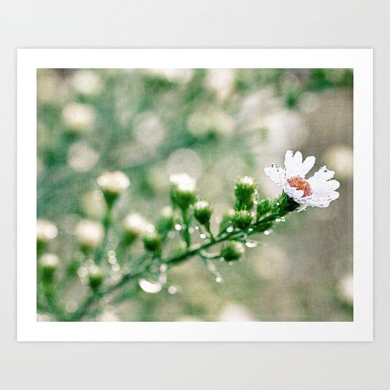 dewy flower Art Print