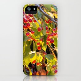 Bright red berries on a tree iPhone Case