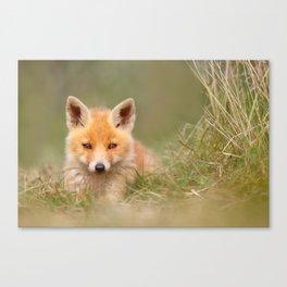 The Cute Kit (Red Fox cub) Canvas Print