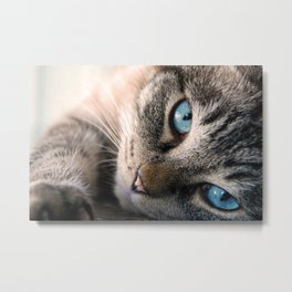 Blue eyed cat Metal Print