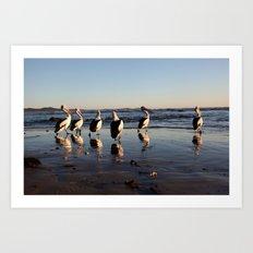 Pelican Reflections Art Print