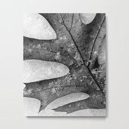 oak leaf and snowflakes Metal Print