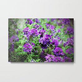 Purple Verbena Metal Print