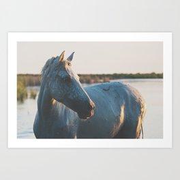 a horse in portrait ... Art Print