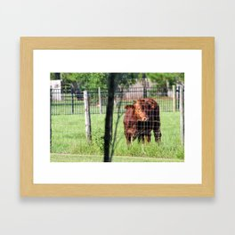 Cow Beyond the Fence Framed Art Print