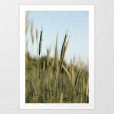 A rich crop Art Print