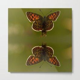 Orange butterfly at sunset Metal Print
