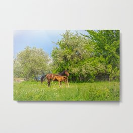 Foal Horse Baby Metal Print
