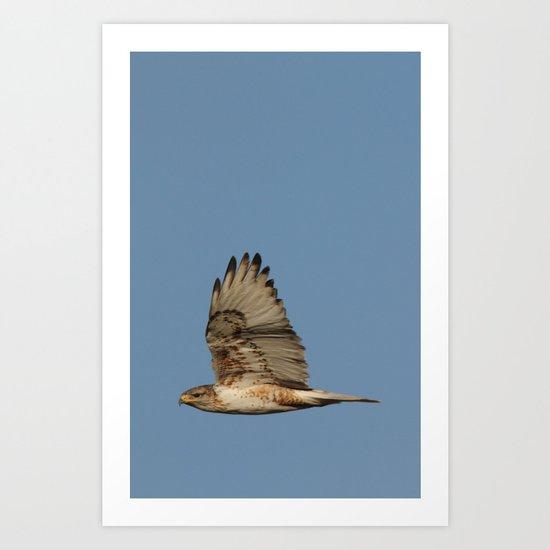 Ferrougenous Hawk Art Print
