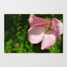 Dogwood and Bee Canvas Print