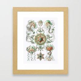 Ernst Haeckel - Trachomedusae (Jellyfish) Framed Art Print