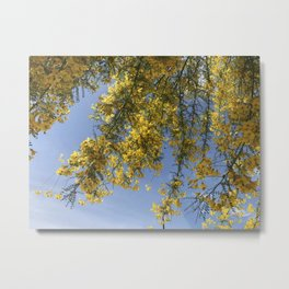 Yellow Flowers on Weeping Branches Metal Print
