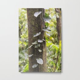 Rainforest Vine Metal Print