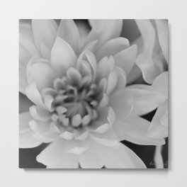 Chrysanthemum Flower in black and white - Floral Photography #Society6 Metal Print