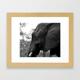 Grand Elephant-One Framed Art Print