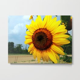 Sunflower in Summer Metal Print